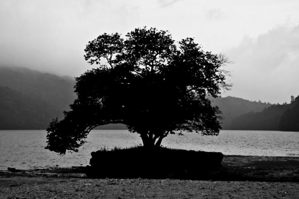 この木、なんの木