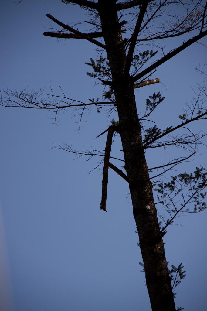 木持ちが折れた
