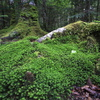 green 絨毯