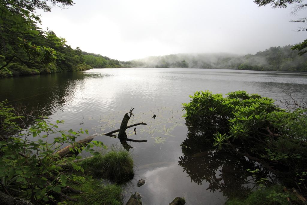 白駒池の朝