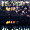 桜からの都橋商店街