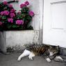 NIKON Nikon SUPER COOLSCAN 5000 EDで撮影した動物(House sitter)の写真(画像)