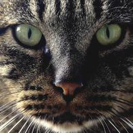 CANON Canon EOS 50Dで撮影した動物(Identity)の写真(画像)