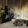 CANON Canon EOS 50Dで撮影した動物(Japanese-style)の写真(画像)