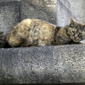 OLYMPUS E-410で撮影した動物(On the alert)の写真(画像)