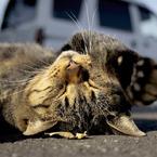 OLYMPUS E-420で撮影した動物(Off-guard)の写真(画像)