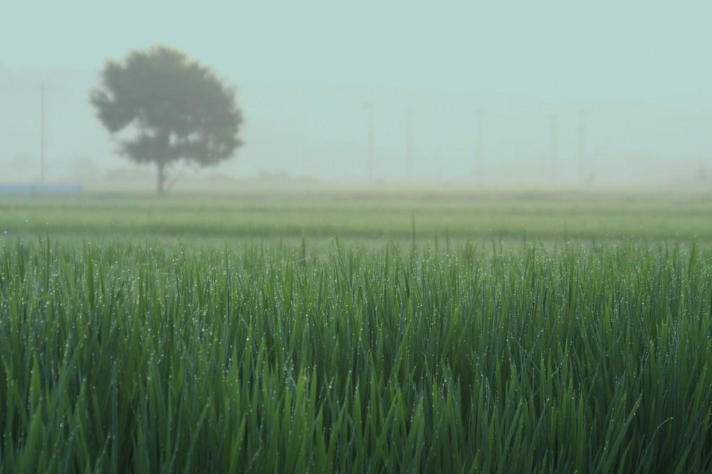 梅雨明けの朝