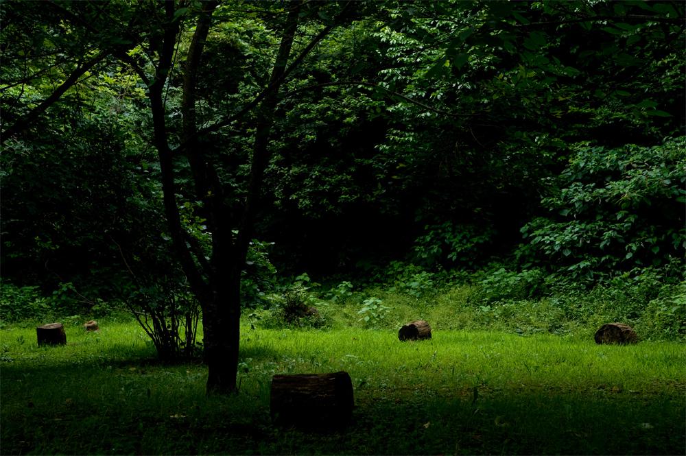 精霊たちの休憩場所