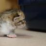 OLYMPUS E-3で撮影した動物(興味津々)の写真(画像)