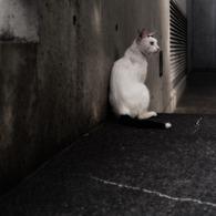 OLYMPUS E-P1で撮影した動物(影で一休み)の写真(画像)