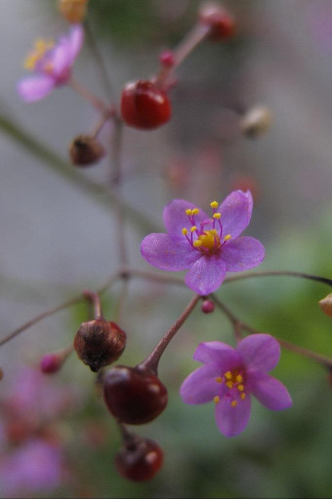 5mm位の花なんですが・・・2
