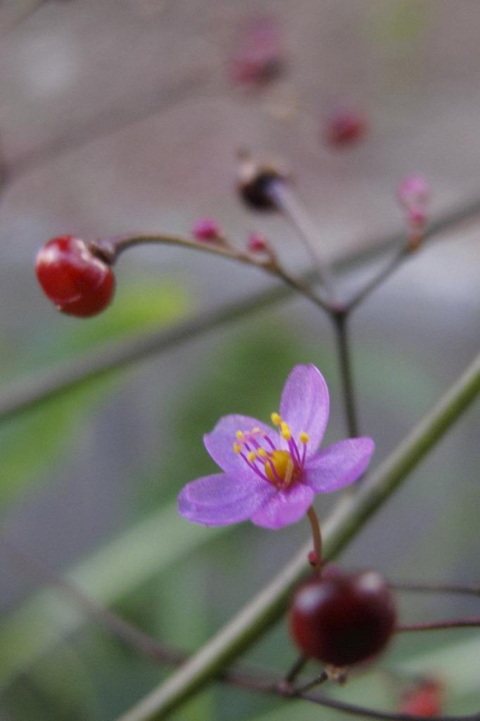 5mm位の花なんですが・・・
