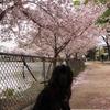 桜とニューファン