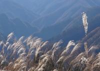 SONY NEX-6で撮影した(すすきで感じる秋)の写真(画像)