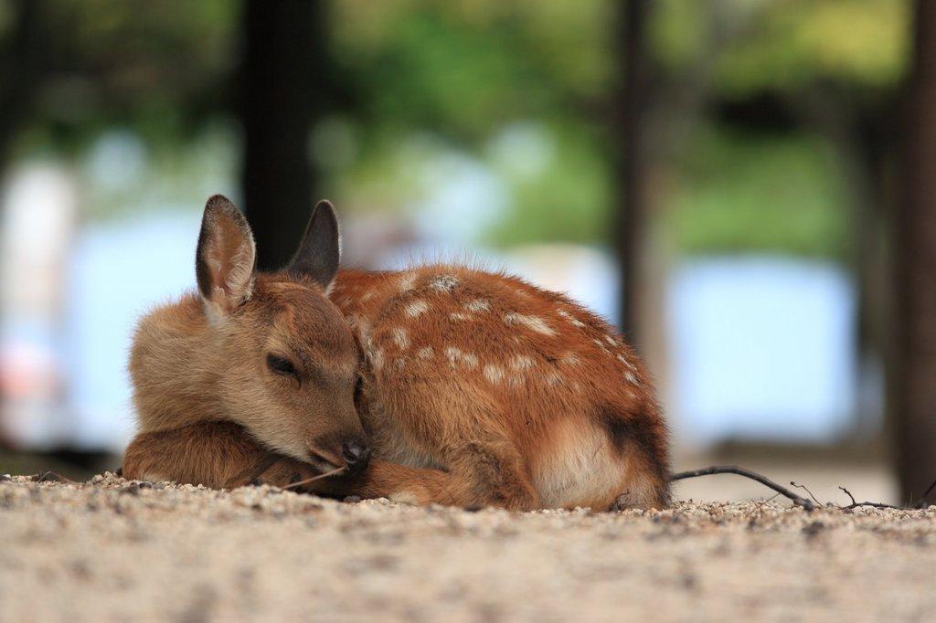 バンビお昼寝