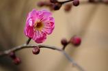 一咲きの花