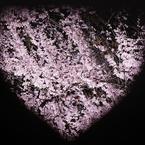 NIKON NIKON D90で撮影した(桜の気持ち)の写真(画像)