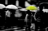 The Rainy Crossing Ⅳ