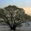 琵琶湖 - 黄昏時