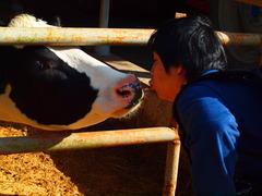 愛は人間と牛という境界線を越えました。