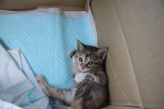 子猫物語⑥「つかれた~」