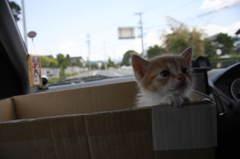 子猫物語①「さてさて、今日はどこに行くのかな?」