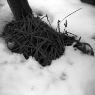 その他のカメラメーカー Ikonta6 (520/16)で撮影した風景(2011撮り初め #3)の写真(画像)