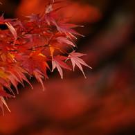 SONY DSLR-A900で撮影した風景(燃える #2)の写真(画像)