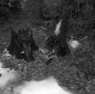 その他のカメラメーカー Ikonta6 (520/16)で撮影した風景(2011撮り初め #2)の写真(画像)