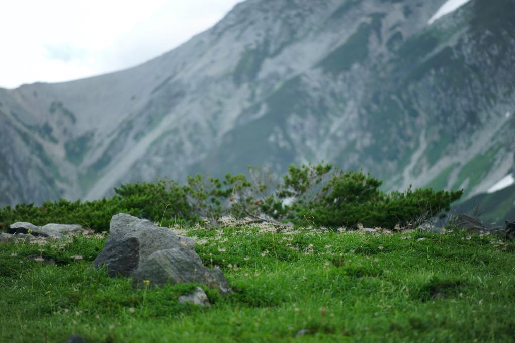 立山、2010晩夏