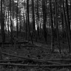 PENTAX ASAHI PENTAX 6×7で撮影した風景(寂光)の写真(画像)