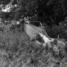 SONY DSLR-A900で撮影した風景(捨て去られた時代)の写真(画像)