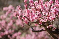 春色に染まって