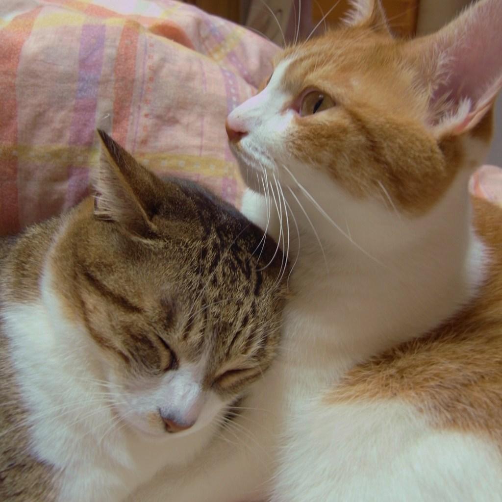 猫肌恋しい季節
