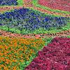 ソウルの花たち