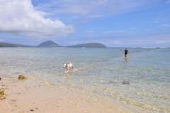 犬も喜ぶビーチ