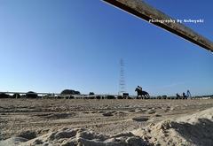 早朝の笠松競馬