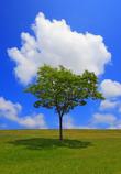 If I were a cloud,  ...