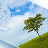 CANON Canon EOS-1Ds Mark IIで撮影した風景(アクリルボード)の写真(画像)