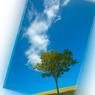 CANON Canon EOS-1Ds Mark IIで撮影した風景(090908 #104)の写真(画像)