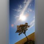 CANON Canon EOS 5D Mark IIで撮影した風景(090920#109(3D ver))の写真(画像)
