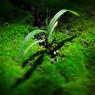 CANON Canon EOS 5D Mark IIで撮影した植物(美なるかな)の写真(画像)