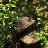 CANON Canon EOS 5D Mark IIで撮影した植物(生命力(ピアノ•パーティー))の写真(画像)