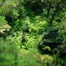 CANON Canon EOS 5D Mark IIで撮影した風景(密林w)の写真(画像)
