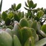 RICOH CX1で撮影した植物(サボテンみたいな植物)の写真(画像)