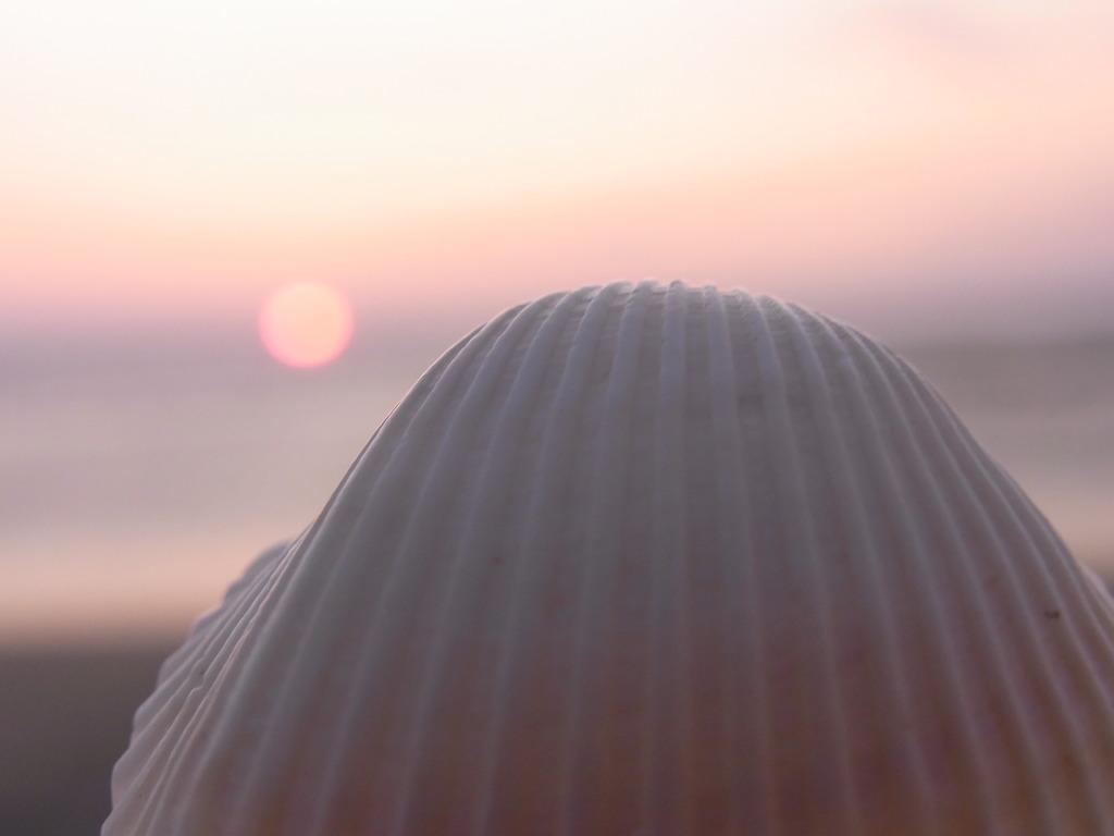 貝殻と夕日