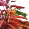 RICOH CX1で撮影した植物(夏っぽい花)の写真(画像)