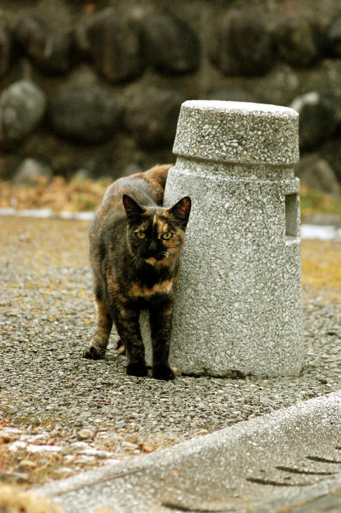 いかにもノラ猫