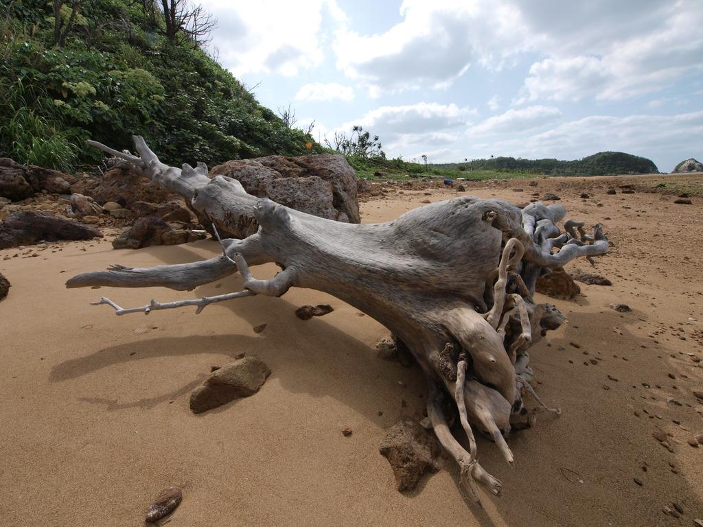 巨大な流木