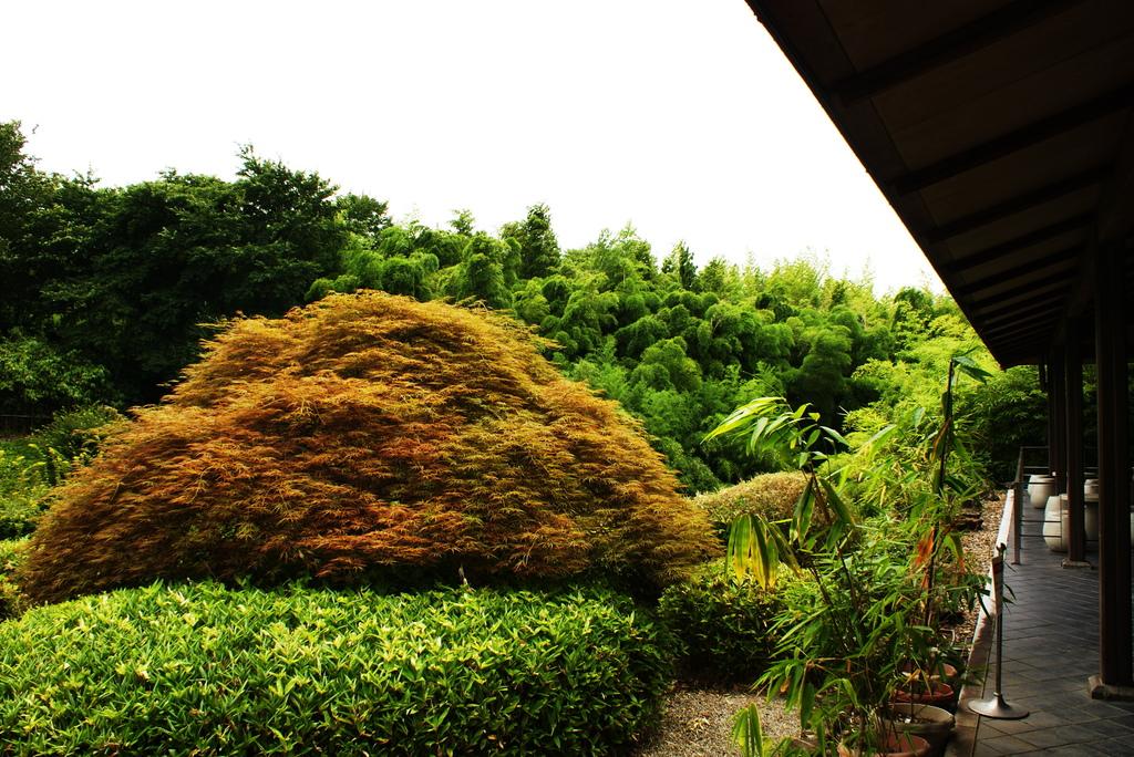 竹林公園はいい。